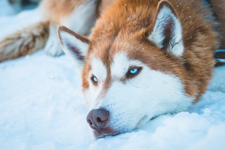 What Makes Good Guard Dogs?