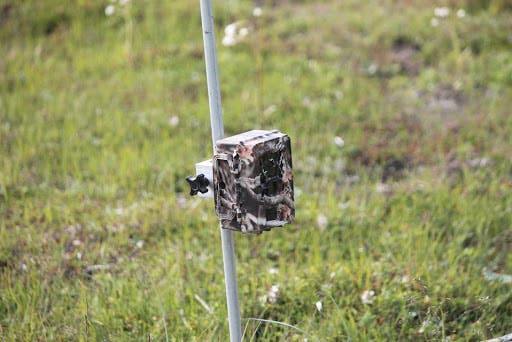 Your Guide to Finding the Best Trail Cam on the Market