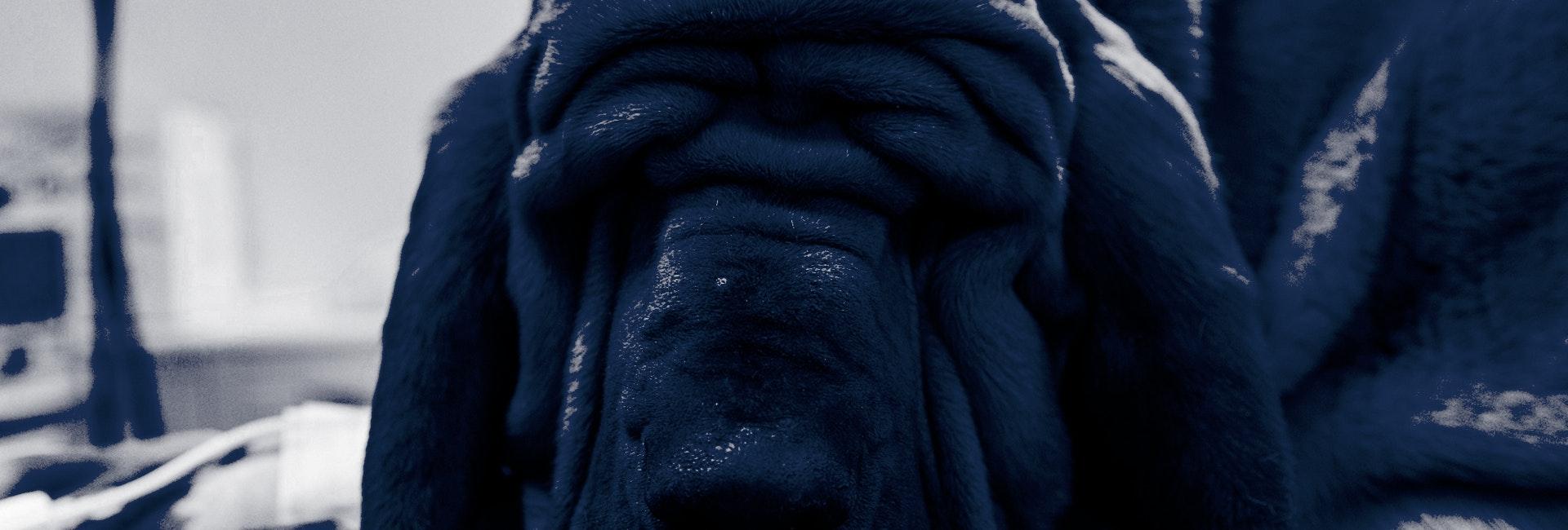 1592230570 sabato 27 bloodhound aslan soccorso alpino elettrochemio e tac22