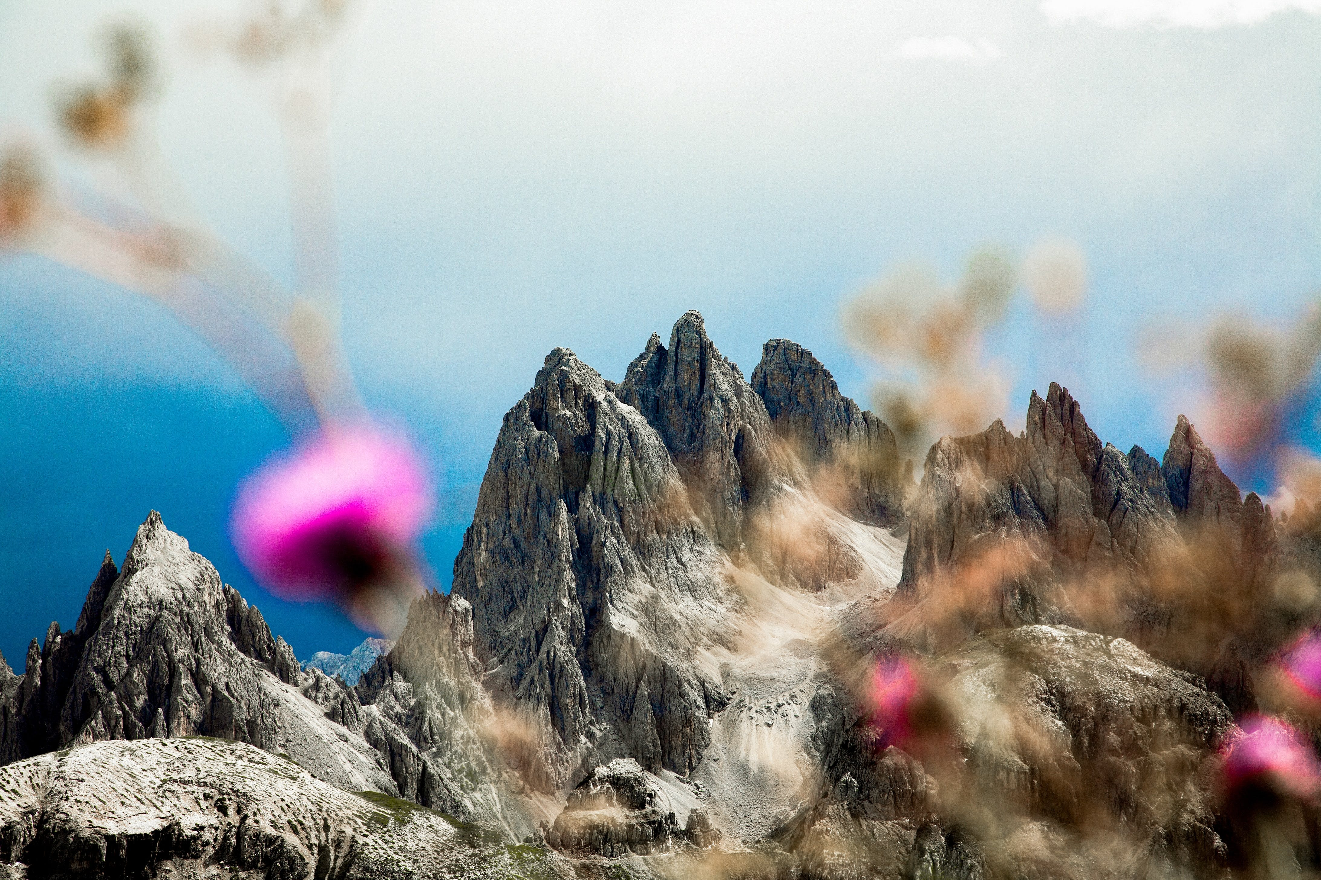 Raum Wald und Pflanzen #alpenkrise