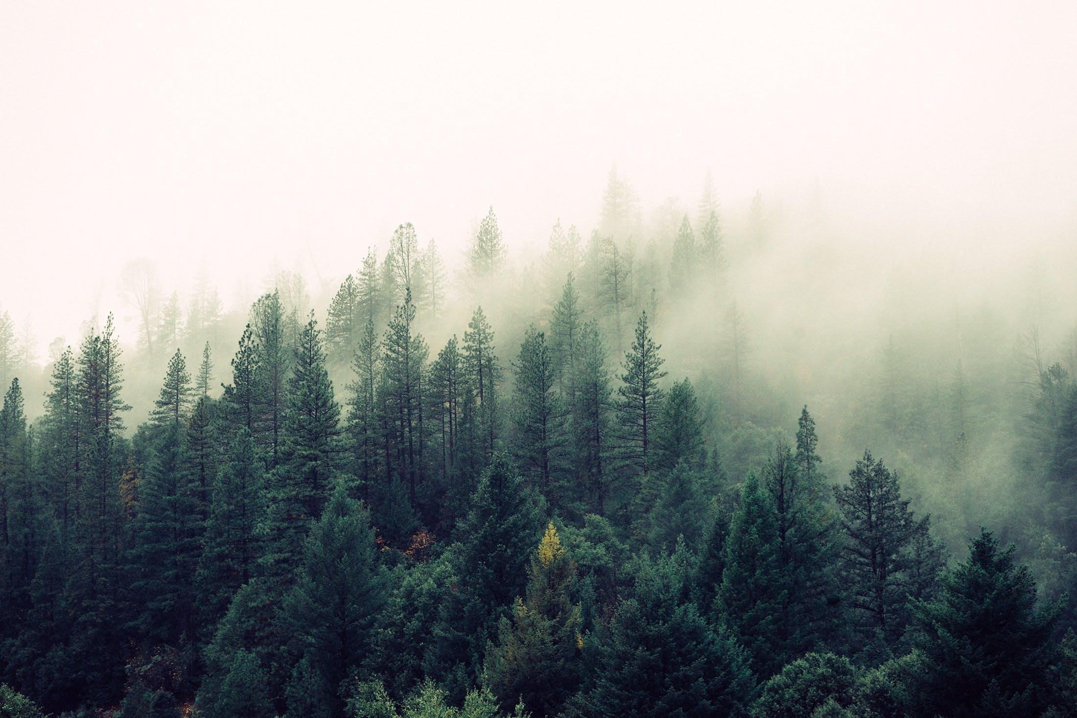 Hintergründe Podcast: Was ist ein Urwald - Matthias Schickhofer im Interview