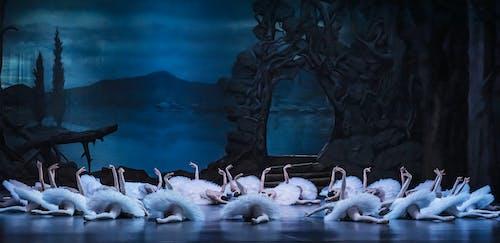 Labutí jezero - soubor Baletu ND - Foto Sergej Gherciu