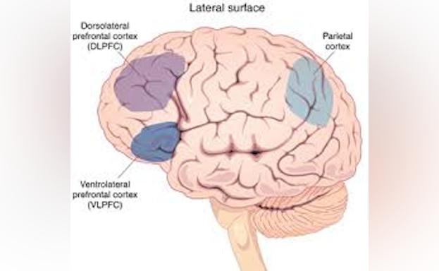 Brain Diagram Averill/Blumberg RC
