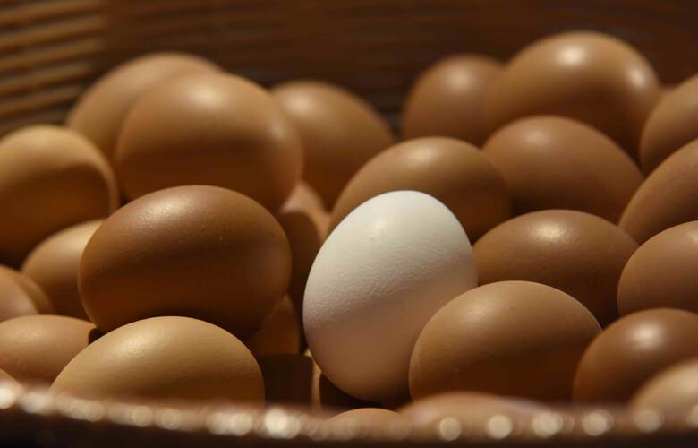 Prodotti freschi uova