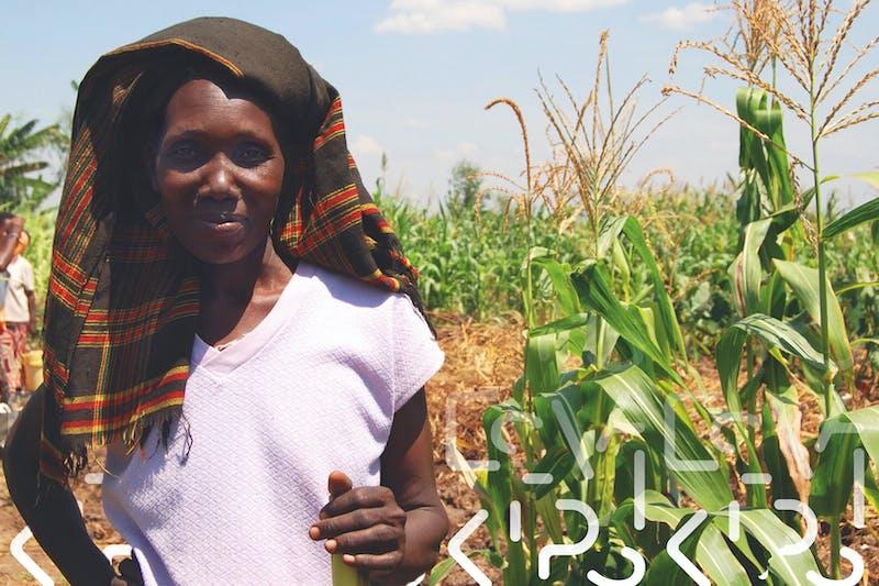 Wakibi, vrouw in maisveld