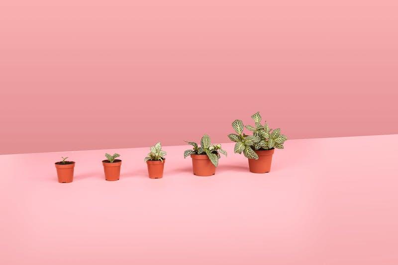 Größer werdende Blumentöpfe, die passives Einkommen symbolisieren