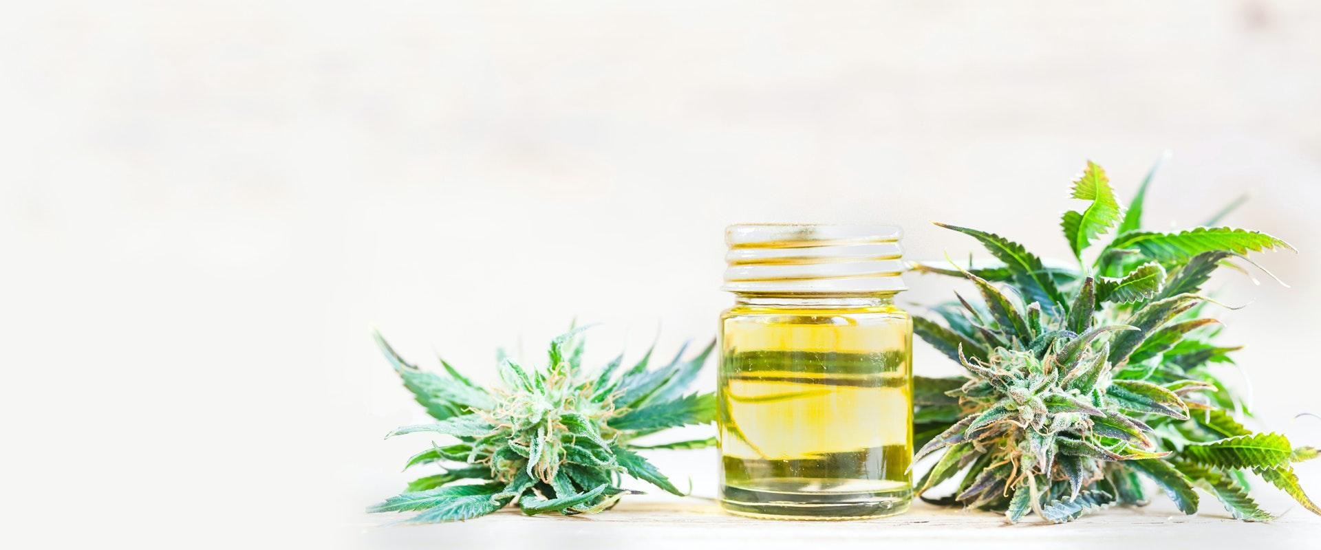 Marijuana buds laying next to a jar of CBD oil