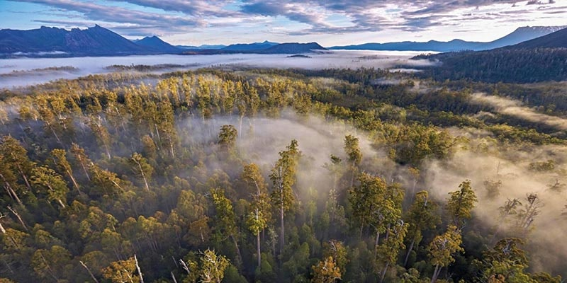 elevated view of Tasmanian world heritage area with fog in trees and mountains in background