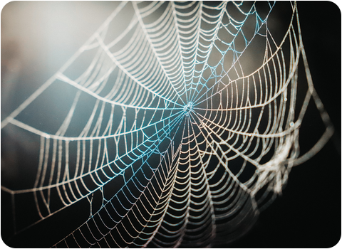 solar traps on spiders web