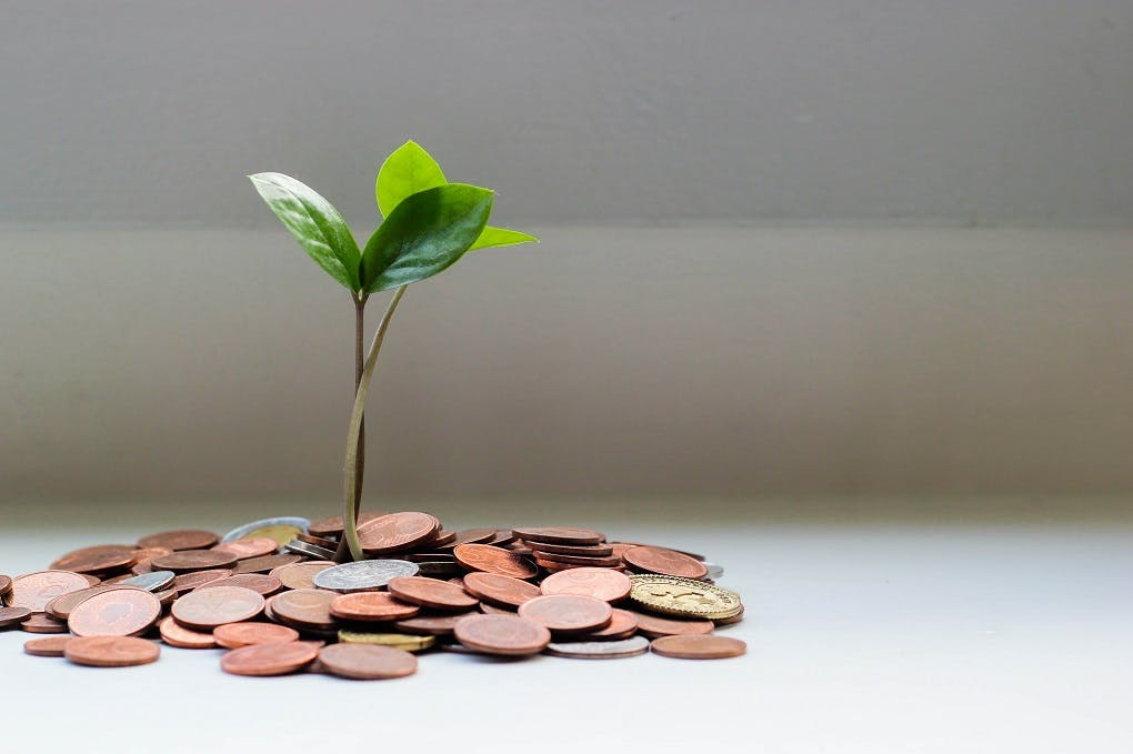 An image of a plant growing out of a pile of money, to symbolize fundraising.