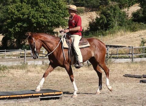 1572193518 cavalli12