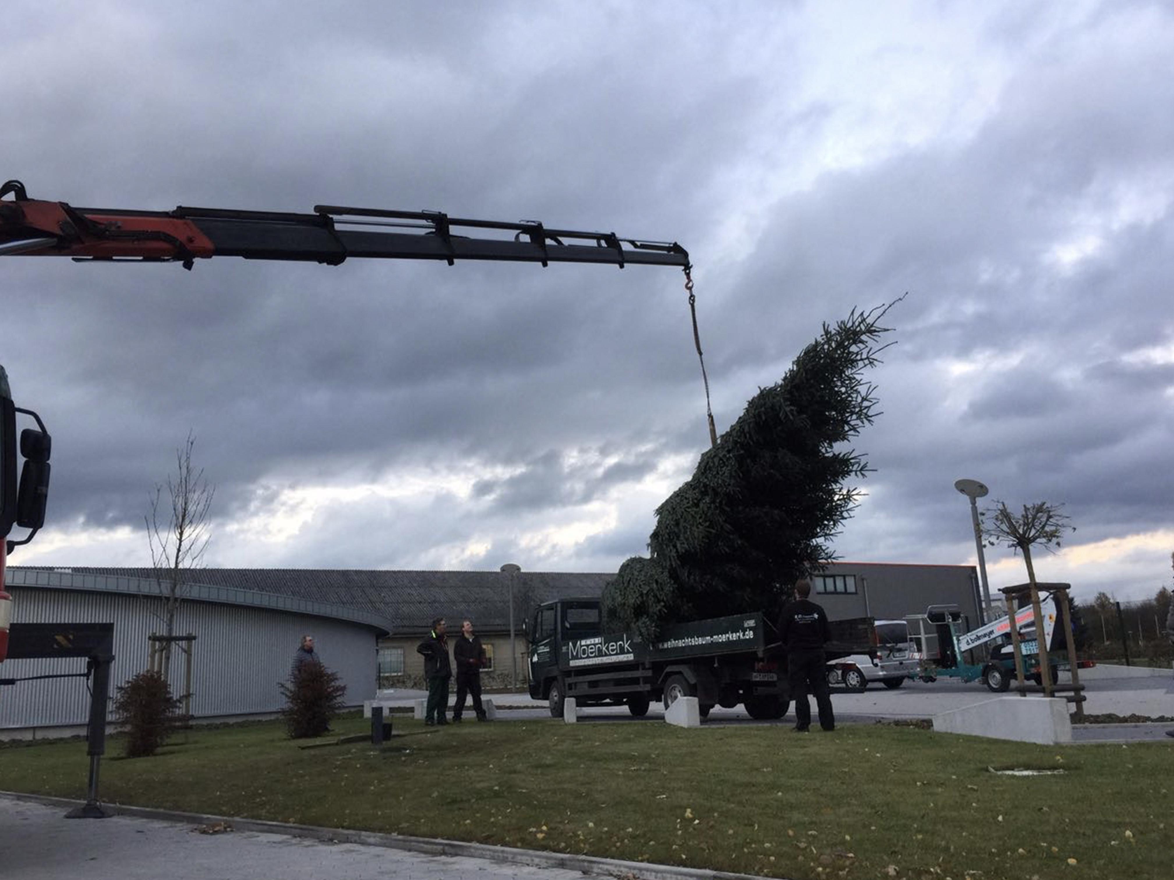 Gechäftskunden, ein großer Baum wird aufgestellt