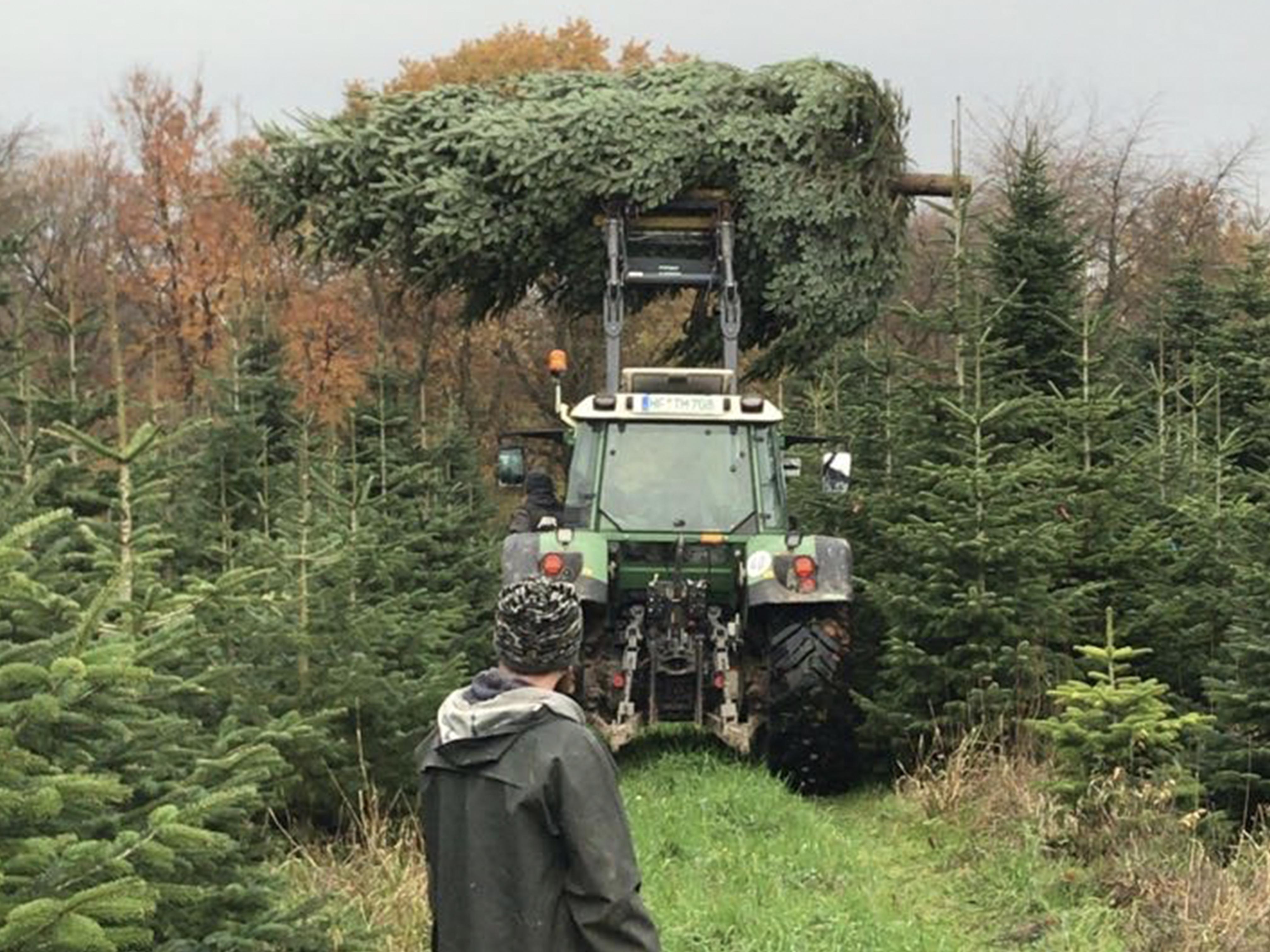 Geschäftskunden, ein großer Baum und Trecker