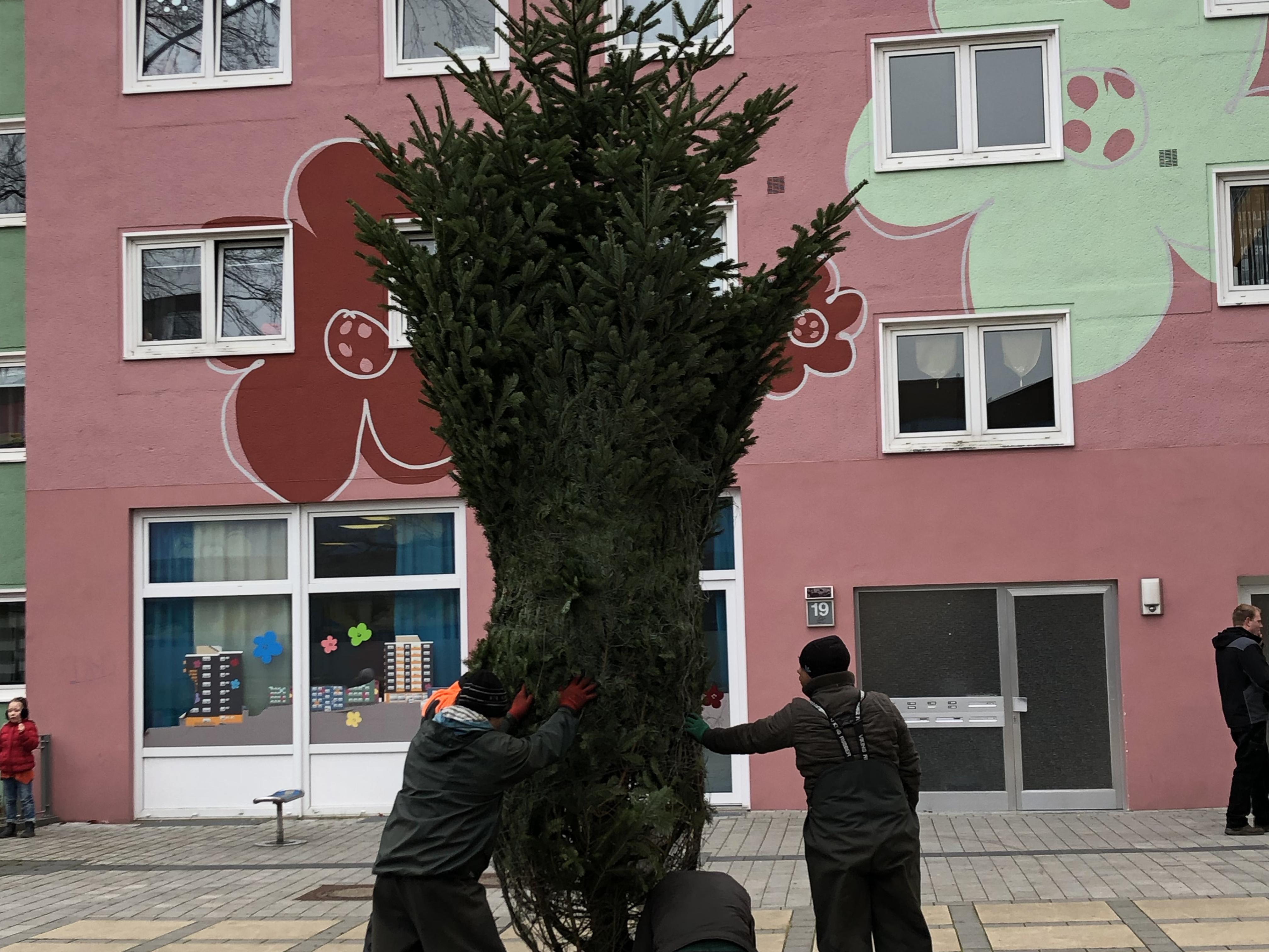 Geschäftskunden, ein großer Baum wird aufgestellt