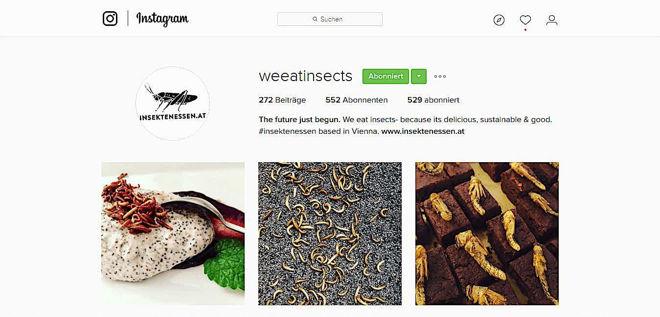 Insektenessen Instagram Profil