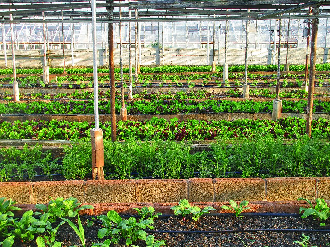FoodTech : agriculture urbaine