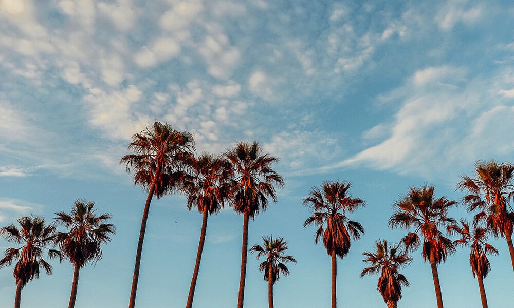 This image may contain: summer, palm tree, plant, tree, arecaceae, nature, tropical, outdoors