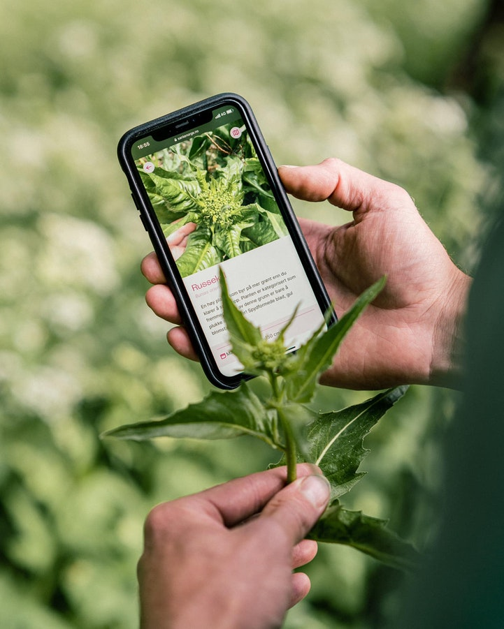 Designing and Developing Norway's First Foraging App