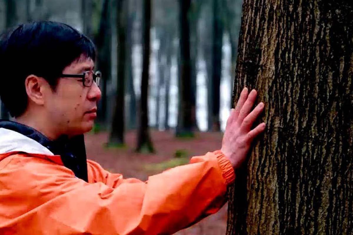 dr qing li forest bathing