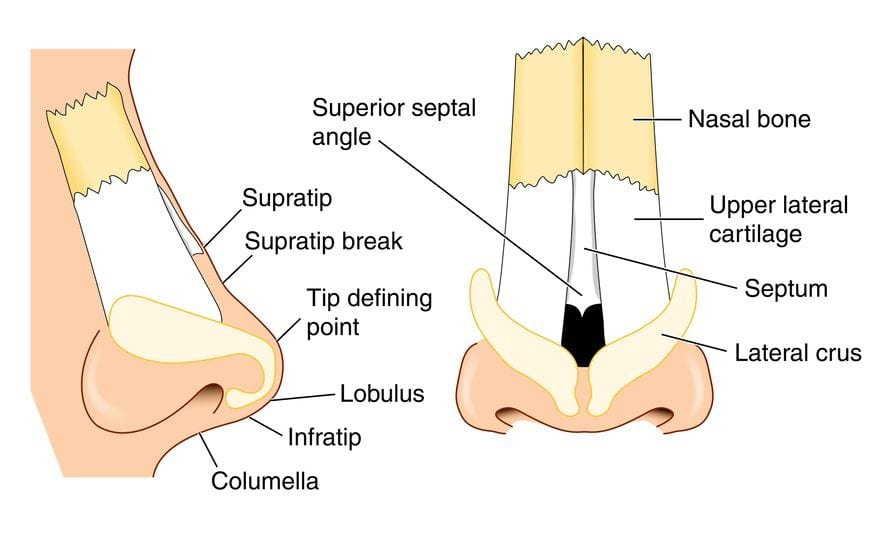 Rhinoplasty diagram