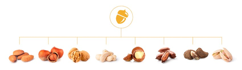 Tree Nut Allergen diagram with main tree nut icon and subsequent tree nuts linking