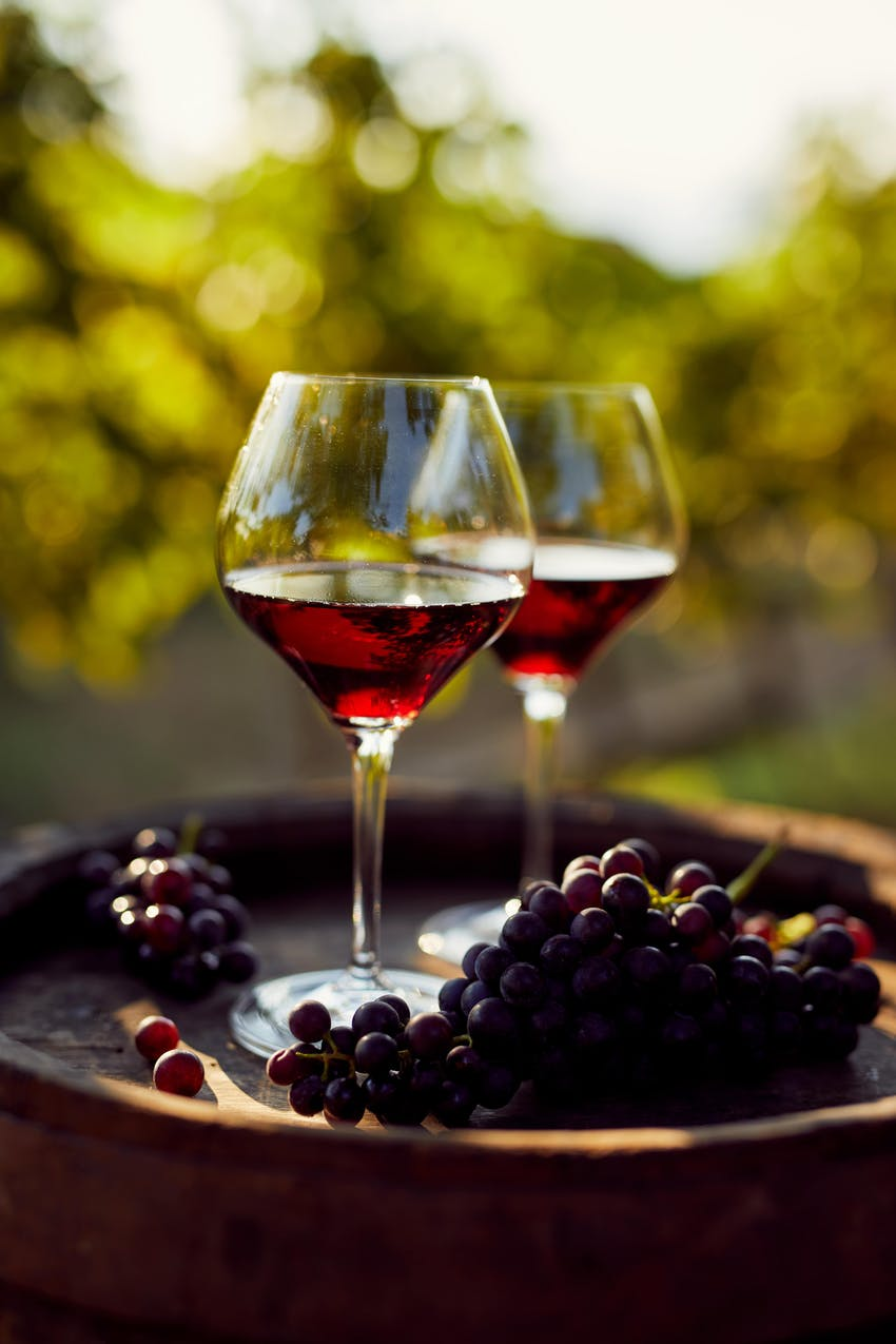 two glasses of red wine on top of an oak barrel with bunches of red grapes in a leafy green garden