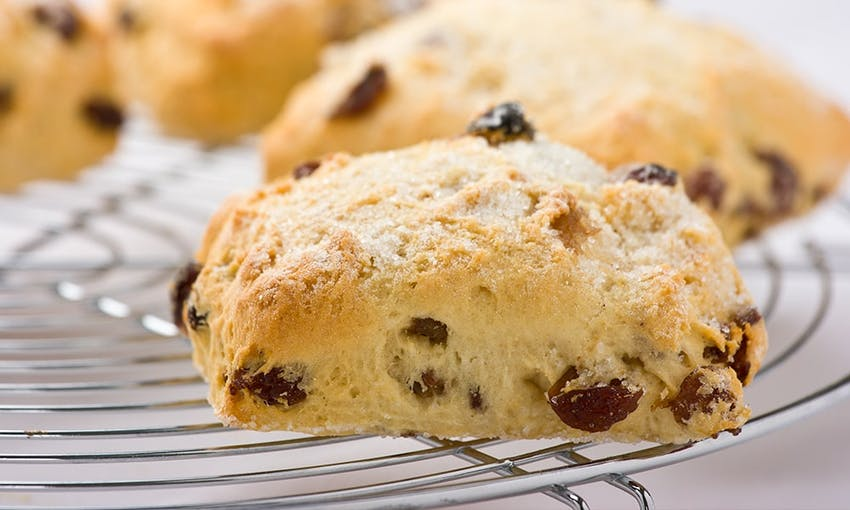 four freshly baked golden rectangular scones with raisins on a silver cooling rack