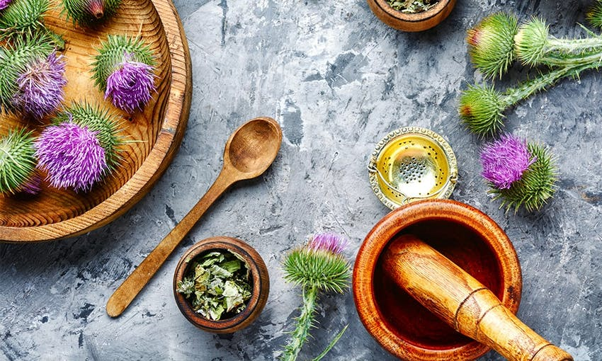 purple and green milk thistle plants on wooden bowls with a wooden pestle and mortar on a stoney table top