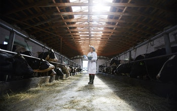 Red Tractor Certification - Cow inspection