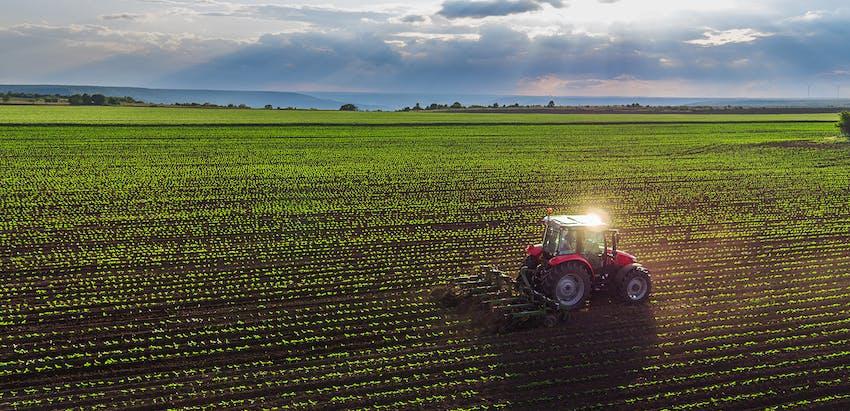 Red Tractor Certification - Crop field