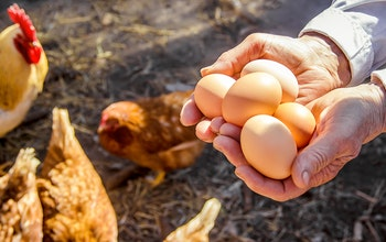 Erudus… Provides British Lion Certification  - Egg production