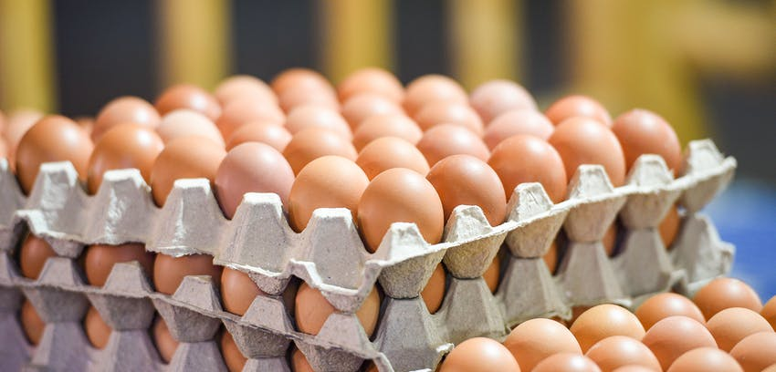 Erudus… Provides British Lion Certification  - Eggs in cartons