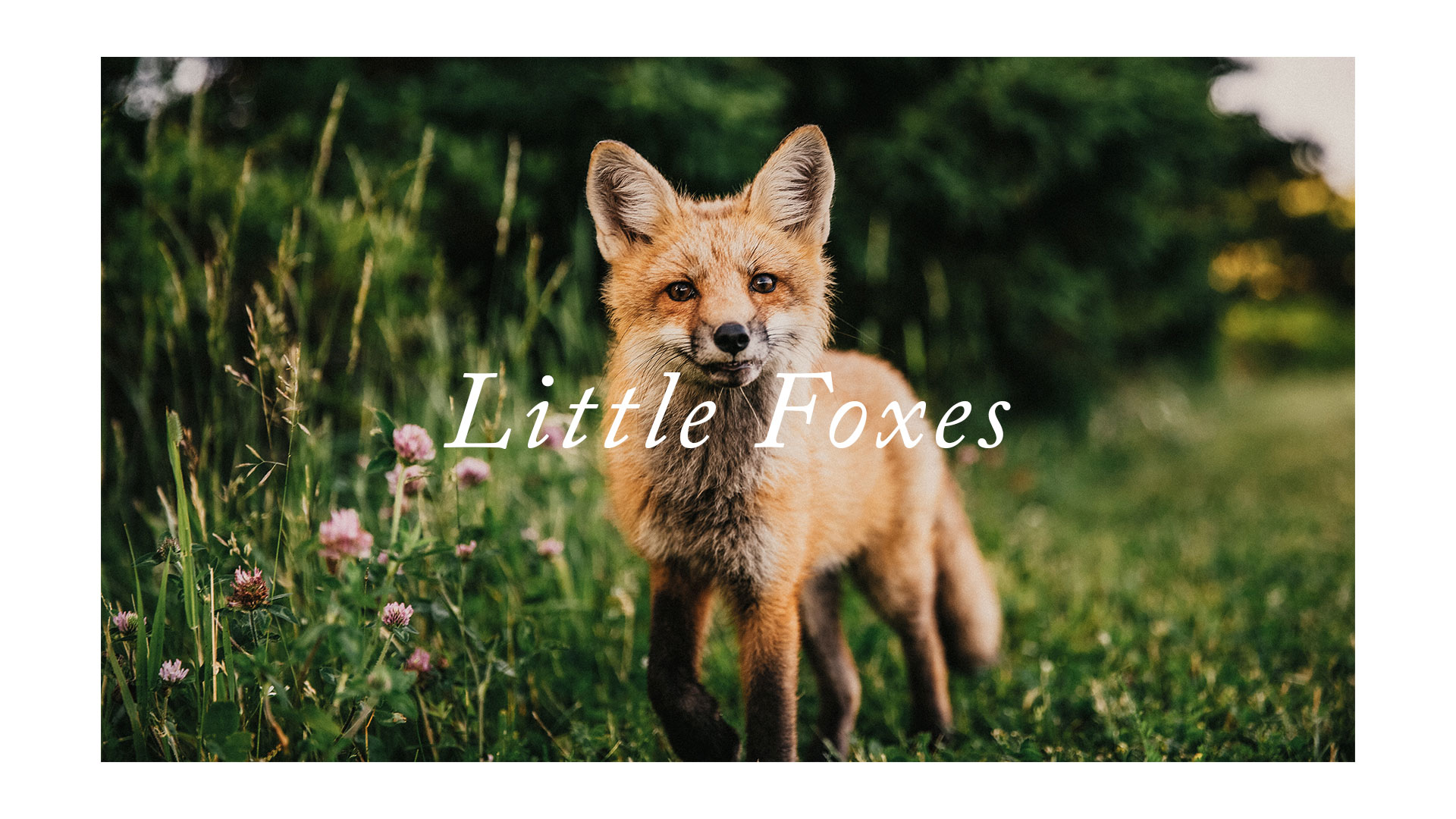 Series: Little Foxes