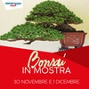 Bonsai in Mostra
