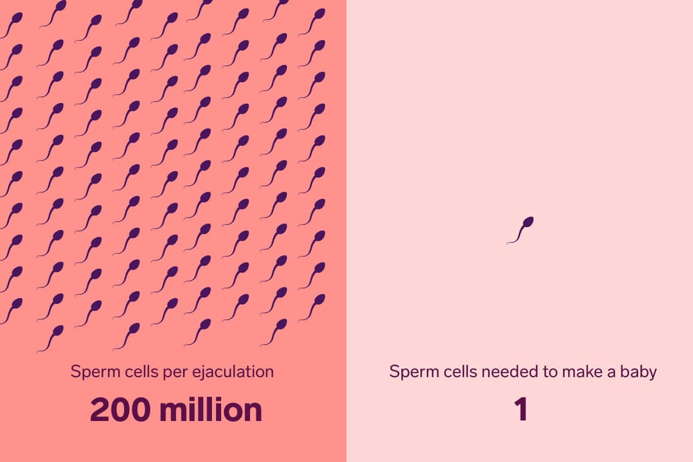 The Truth about Sperm Survival: How Long Do Sperm Live? | Natural Cycles