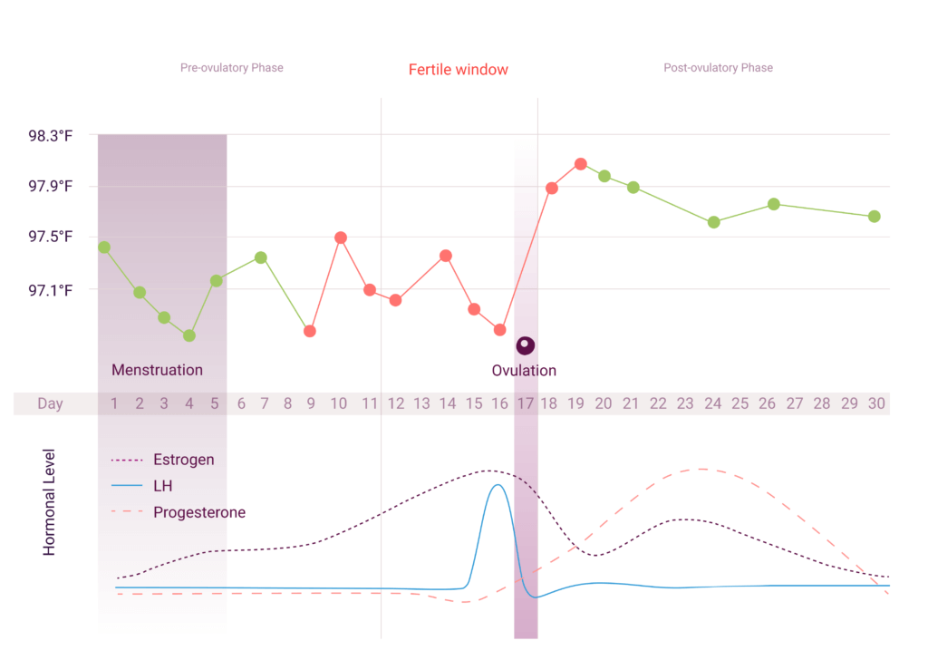 The temperature graph in the natural cycles app displaying ovulation, red and green days