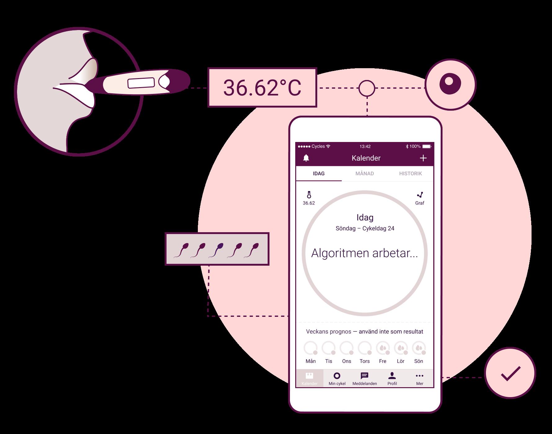 Diagram som visar hur Natural Cycles fungerar: en mun med en termometer, sammankopplad med en bild på Natural Cycles appen där det står