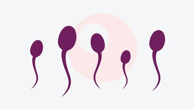 5 sperm cells swimming above a female egg cell