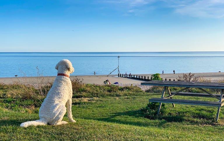 Picnic Beach Dog