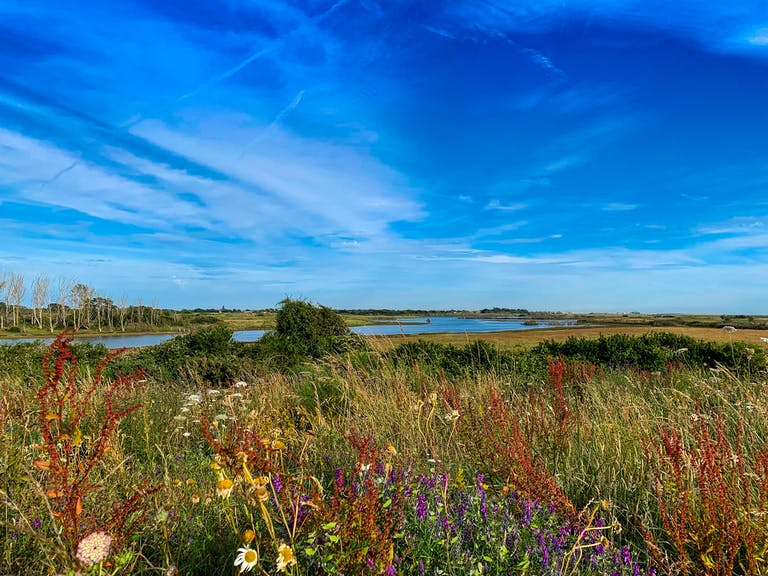 Waves of wild flowers during summer at RSPB Medmerry