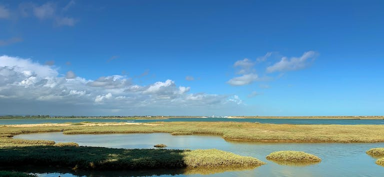 Grassed islands for birds to roost