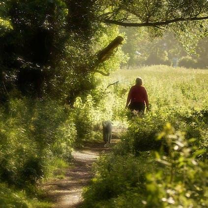 Walking along a pathway of greens and dappled sunshine at Church Norton