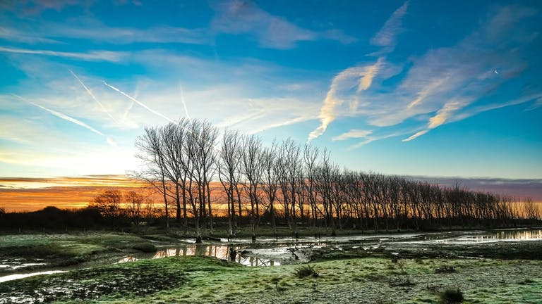 Majestic line of trees slowly being poisoned with salt as the sea water breaches the meadows at RSPB Medmerry.  Standing amongst a sky of deep blues, oranges, yellows and purple on a winters morning.