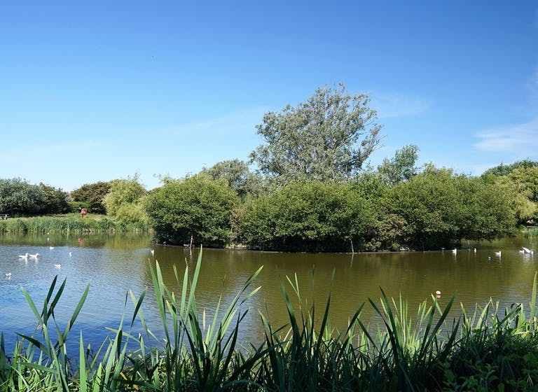 image of a East Beach Pond with nature island in the middle