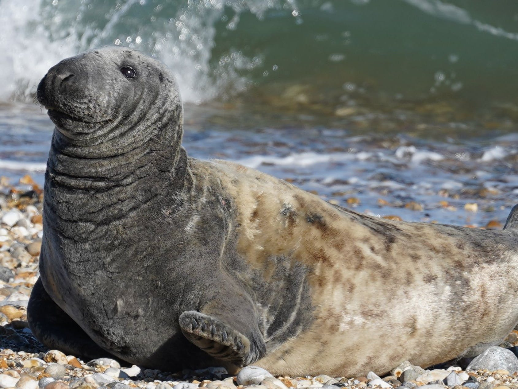 Selsey Seal
