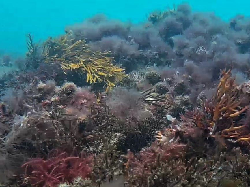 Different colours of coral in the water off the coat of Selsey