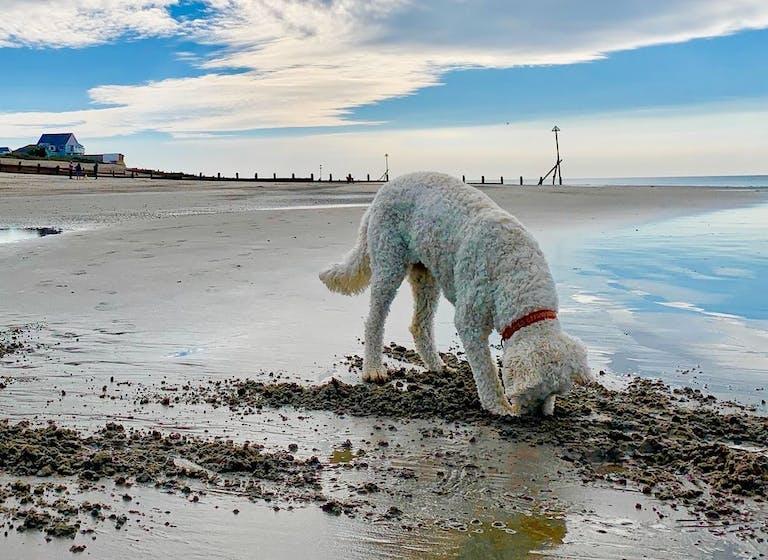 Dogs Just Want to Have Fun at Marine Beach, courtesy of CoastalJJ