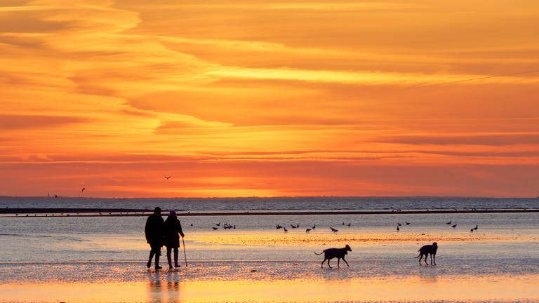 A couple walking along the sandy beach at Selsey at sunset accompanied by their two dogs