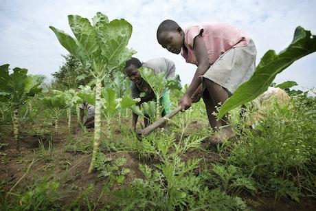 Strijd tegen kinderarbeid in Oost-Afrika