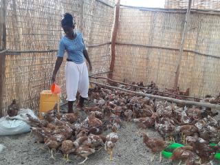 ethiopie_kinderhandel_afrika_kippen.jpg